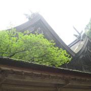 ∞ 美保神社 「漁業・商売繁盛」のコトシロヌシ(えびす様)と「農業・子孫繁栄」のミホツヒメを祀っています。