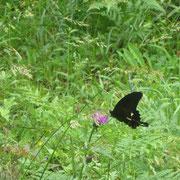 ❀ 蝶: 復活の意味を持ち、不死の象徴とされています。蝶は成長し、変化を経て美しい蝶に変わることから、変化と喜びの象徴ともされています。