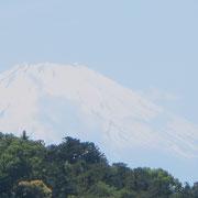 ❀ 大本山 円覚寺より見上げる世界文化遺産富士山
