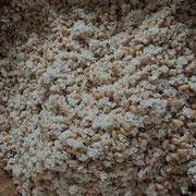 """5日目その4《大豆、ゆで汁を混ぜる》塩をまぶした米麹に、大豆を混ぜる。一握りしてみて""""味噌""""と同じ柔らかさになるよう、取っておいたゆで汁を加える。"""