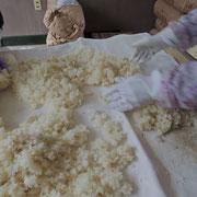 2日目《麹菌をまぶし保温機へ》2時間かけて蒸し上げたご飯を少し冷まし(高温すぎると麹菌が死んでしまう)、上からもやし(麹菌の種)をぱらぱらと振りかけ、弾力が感じられるまで良く揉み込みます。熱湯殺菌した湿タオルで包み、育苗機(保温機)へ。