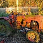 Traktor in der Abendsonne
