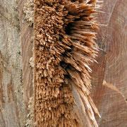 Zerfasertes Holzstück