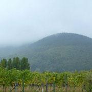 Rhodt unter Rietberg | Weinstöcke