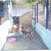 Гостиница для собак в Курске