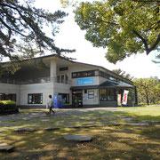 ケープ真鶴の中の真鶴町立遠藤貝類博物館が面白かった。生きた化石と呼ばれる「オキナエビス」があります。