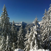 Am Spitzingsee Wald liegt frischer Schnee, der sich auf den Tannen festgesetzt hat