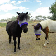 Black & Jessie sporting their new fly masks