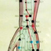 Schéma des méridiens du bras.