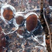 """""""les glands pris dans la glace"""" 2012"""