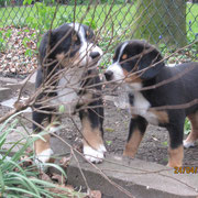 Anca und Amilj bei der 'Gartenarbeit'