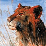 A 6: Panthera leo. 1992, Aquarell 30 x 42 cm: 150.- Euro.