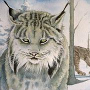 A 26: Snowtime (Kanadaluchs, Lynx canadensis). 2015, Aquarell 40 x 30 cm: 450.- Euro.