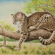 A 21: Best Place (Salzkatze, Leopardus geoffroyi). 2015, Aquarell 40 x 30 cm: 450.- Euro.