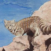 A 20: Bergfee (Andenkatze, Leopardus jacobita). 2015, Aquarell 40 x 30 cm: 450.- Euro.