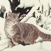 A 11: I Will Survive! (Wildkatze, Felis silvestris). 2014, Aquarell 51 x 35 cm.
