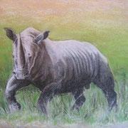 A 15: Breitmaulnashorn (Ceratotherium simum). 2014, Pastell 40 x 30 cm: 200.- Euro.