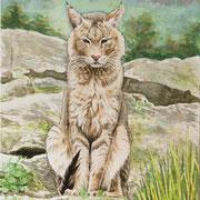 A 31: What Du You Want? (Rohrkatze, Felis chaus). 2016, Aquarell 30 x 40 cm.