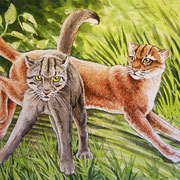 A 33: Playtime (Borneo Goldkatze, Pardofelis badia). 2016, Aquarell 40 x 30 cm: 450.- Euro.