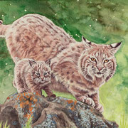 A 19: Mama passt auf (Rotluchs, Lynx rufus). 2015, Aquarell 40 x 30 cm.