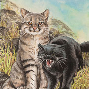 A 25: Black Brother (Pampaskatze, Leopardus colocolo). 2015, Aquarell 30 x 40 cm: 450.- Euro.