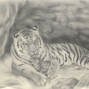 Z 3: Mother Loves Her Child (Panthera tigris), 2014, Graphitzeichnung 35 x 26 cm.