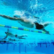 Erwachsener Crawlschwimmer