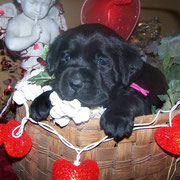 Jill at 4 weeks