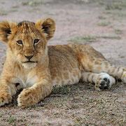 in2kenya safari kenya watamu