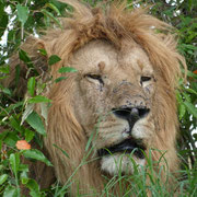 in2kenya travel safari kenya