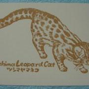 松野由起子@stamp zoo