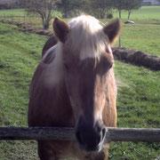lustige,witzige Sprüche - Sprüche über Pferde - Pferdesprüche