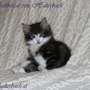 Balthazar 7 Wochen
