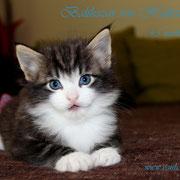 Balthazar 4,5 Wochen