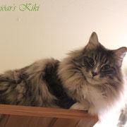 Kiki 1 Jahr 11 Monate