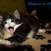 Balthazar 5 Wochen