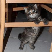 Akira mit 5 Wochen