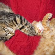 Akira und Akimba mit 4 Monaten
