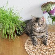 Akira mit 3 1/2 Monaten