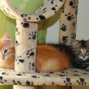 Akira und Akimba mit 11 Wochen