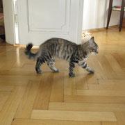 Akira mit 5 Monaten