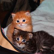 Akimba und Akira mit 4 Wochen