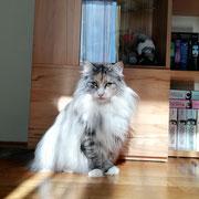 Sunny 4 Jahre