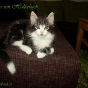 Balthazar 9 Wochen