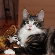 Balthazar 4,5 Monate