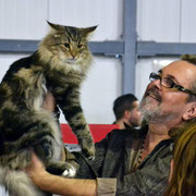 Scypion 2 1/2 Jahre auf der FIFe World Cat Show '16 in Wien