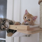 Akira und Akimba im neuen Zuhause mit ca. 4 Monaten