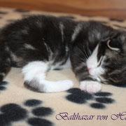 Balthazar 9 Tage