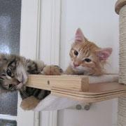 Akira und Akimba in ihrem neuen Zuhause mit nicht ganz 4 Monaten