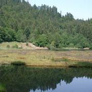 Le lac Nonnenmattweiher, réserve naturelle.